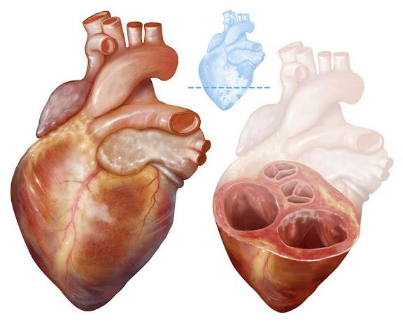 HeartNoGel